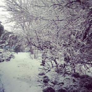 snow**